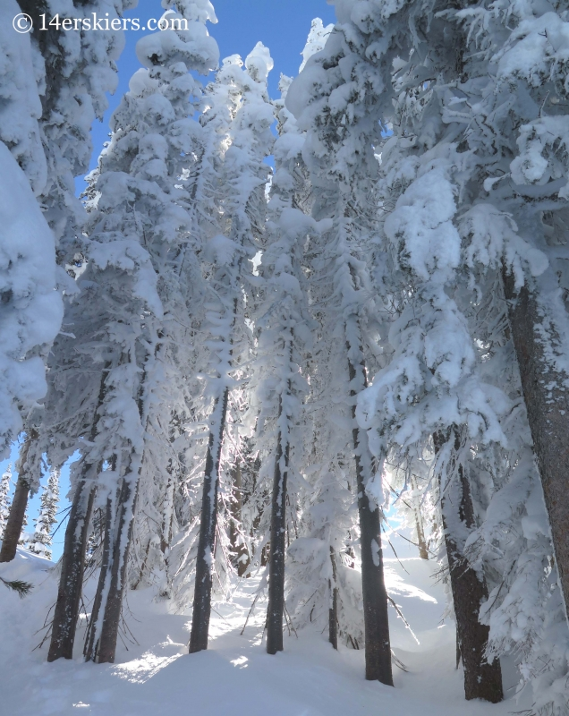 frosty crested butte trees
