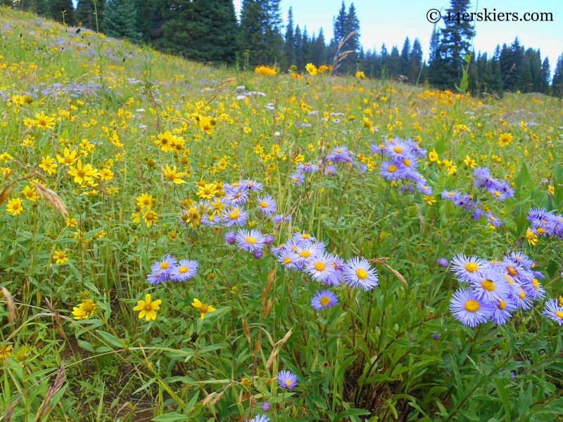 wildflowers on the Cliff Creek trail near Crested Butte