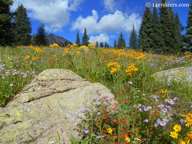 colorful wildflowers on Cliff Creek trail near Crested Butte