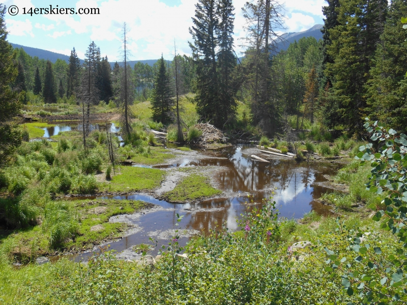 swamps on the Beckwith Bench trail near Crested Butte
