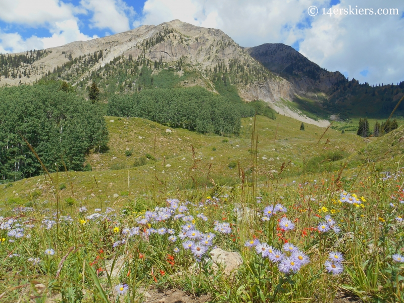 Wildflowers with East Beckwith near Crested Butte