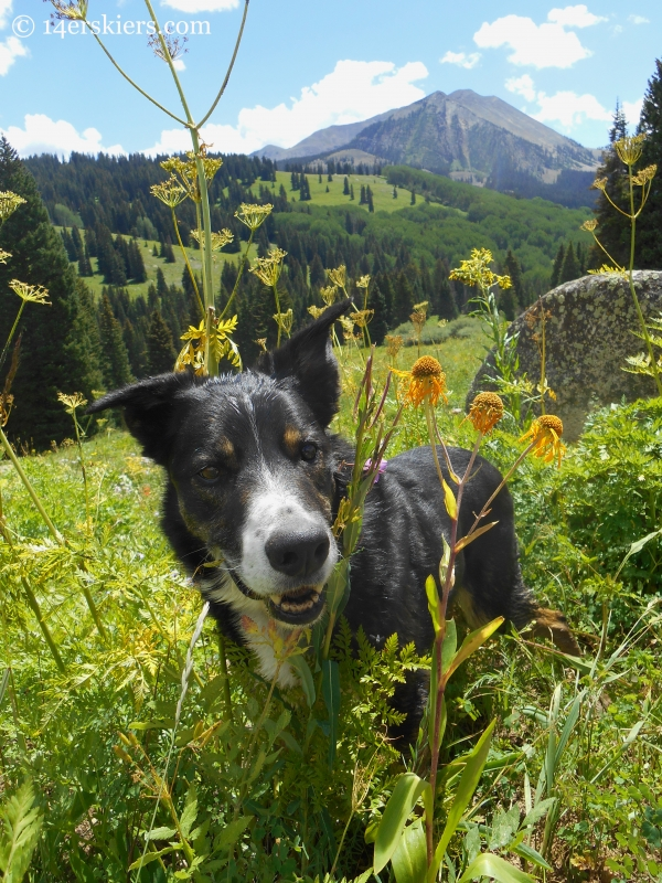 Eddy hiking near Crested Butte