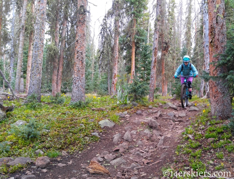 Mountain biking Colorado Trail Segment 17 to Big Bend