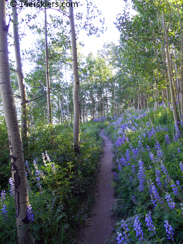 Lupine on Columbine trail at Crested Butte Mountain Resort