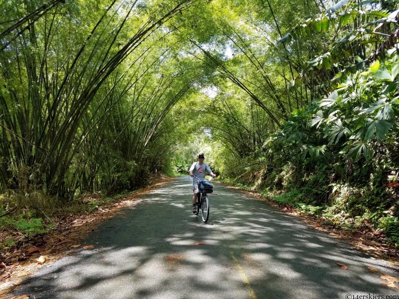 panama bamboo forest