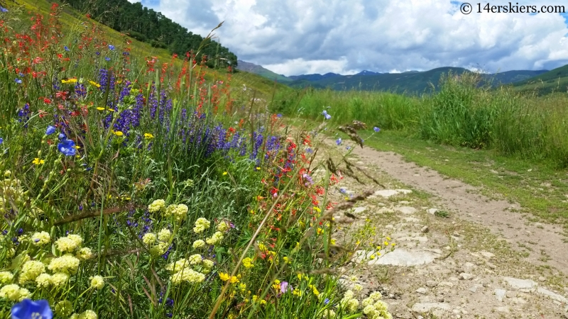 Wildflowers on the East River trail in Crested Butte