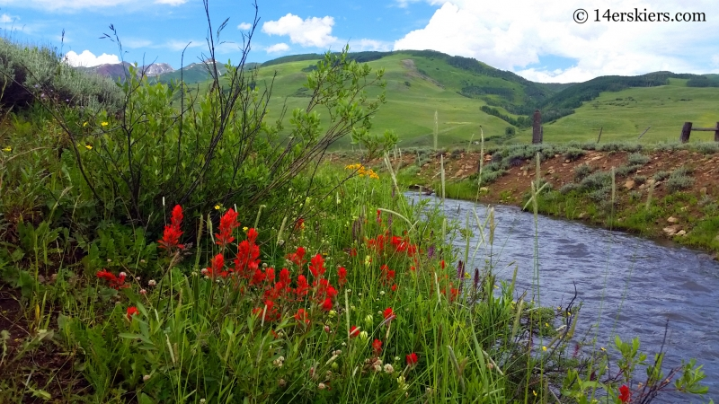 Wildflowers on the Brush Creek Trail in Crested Butte