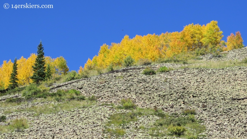fall trees while hiking Carbon Creek near Crested Butte
