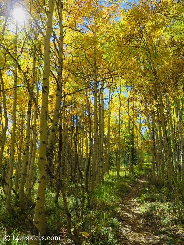 golden aspens on Carbon Creek near Crested Butte.