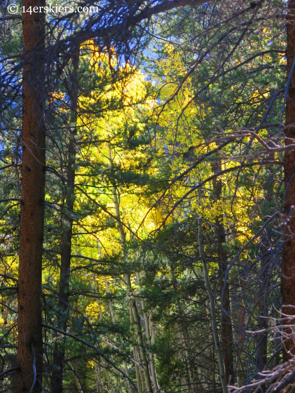 fall hiking on Carbon Creek near Crested Butte