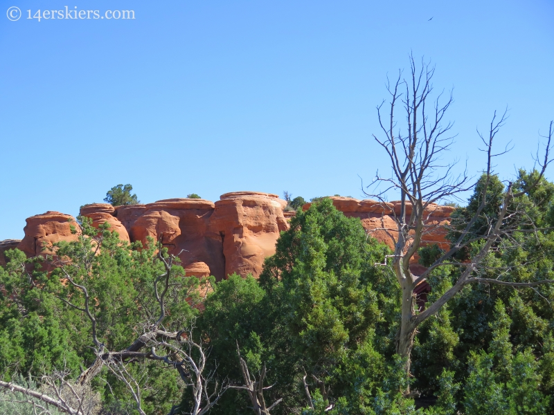 Red and green in the Colorado National Monument.