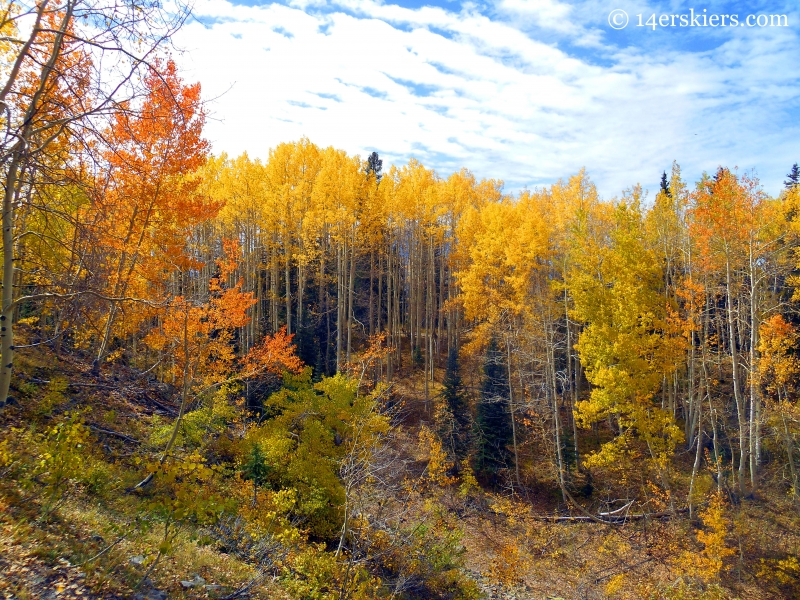 Rainbow of colors on a fall ride on the Dyke Trail near Crested Butte, CO
