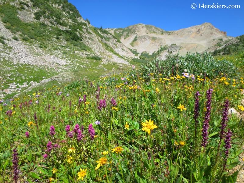 Wildflowers near East Maroon Pass.