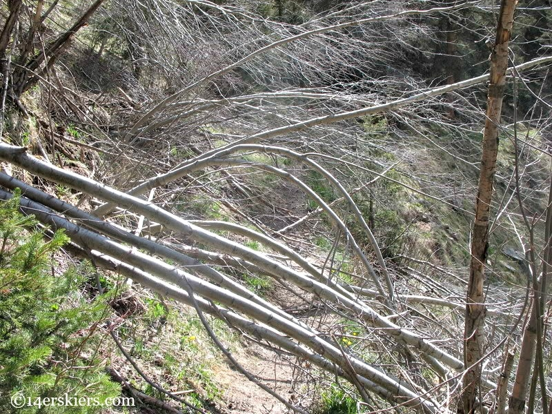 Trail to Chicago Basin blocked by avalanche debris.
