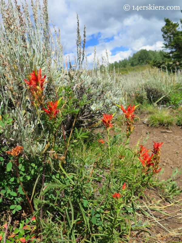 paintbrush on the Grand Mesa