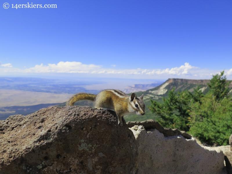 chipmunk on Grand Mesa