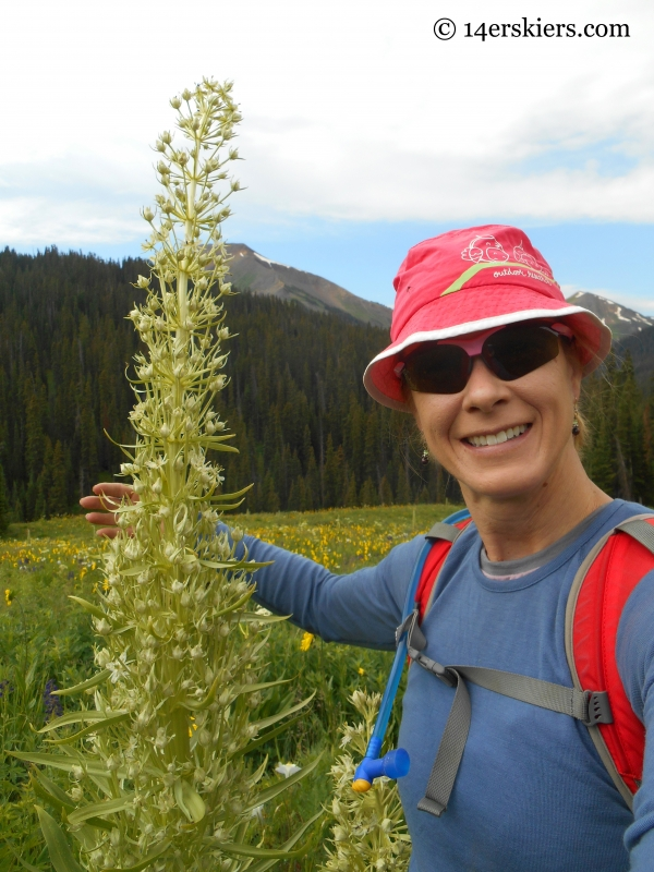 Monument flower, or Green Gentian near Hasley Pass, Crested Butte