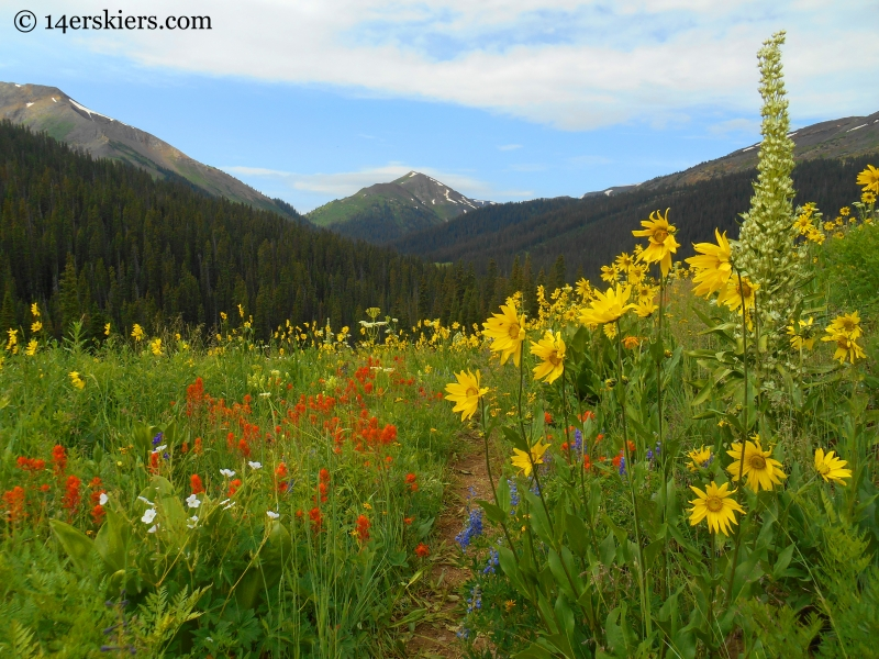 Wildflowers near West Maroon Pass near Crested Butte