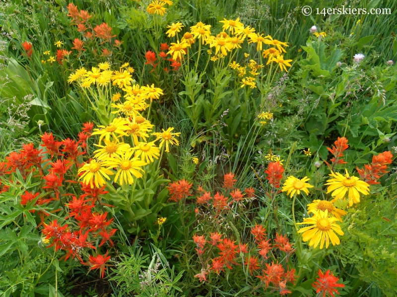 Hasley Pass Wildflowers
