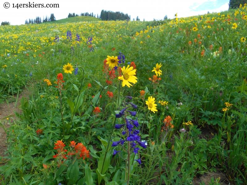 Hasley Pass hike wildflowers