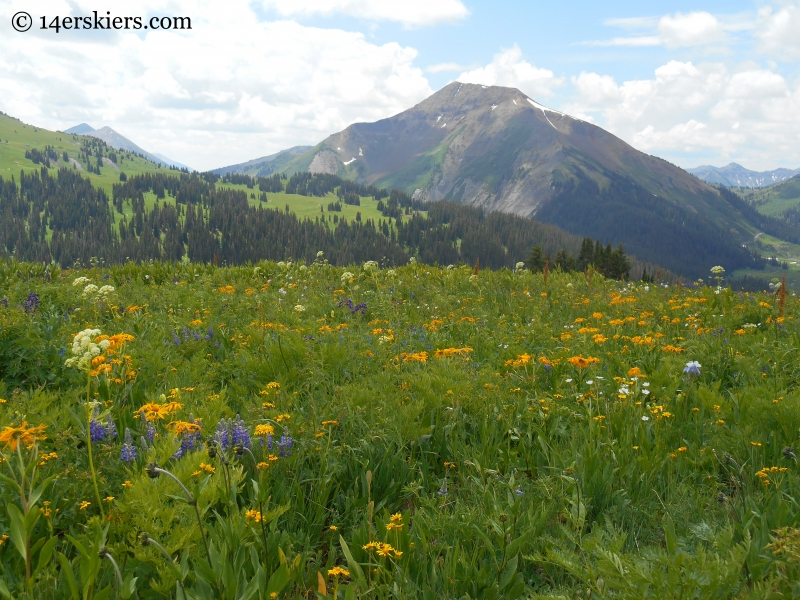 Baldy with wildflowers on the Hasley pass hike
