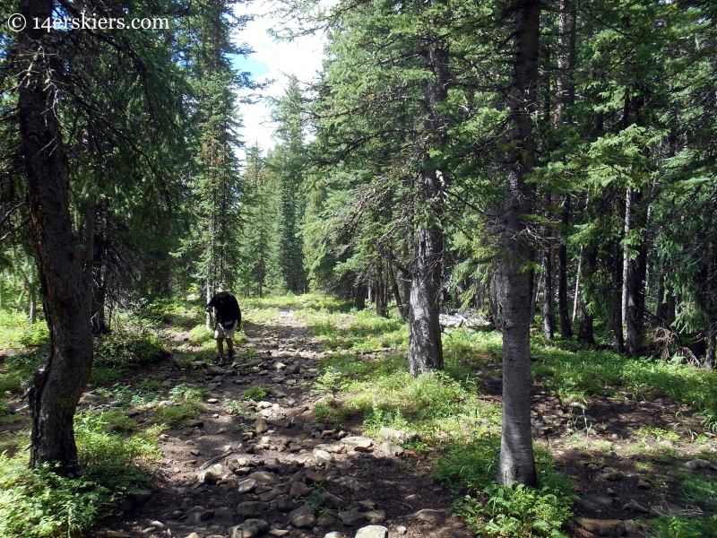 Forest on the trail from Horse Ranch to Swampy Pass near Crested Butte