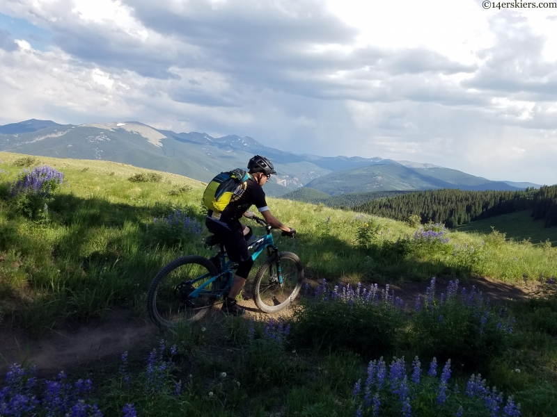 lupine and singletrack near taylor river colorado