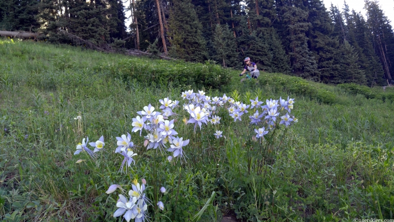 columbine wildflowers and doctor park bike trail