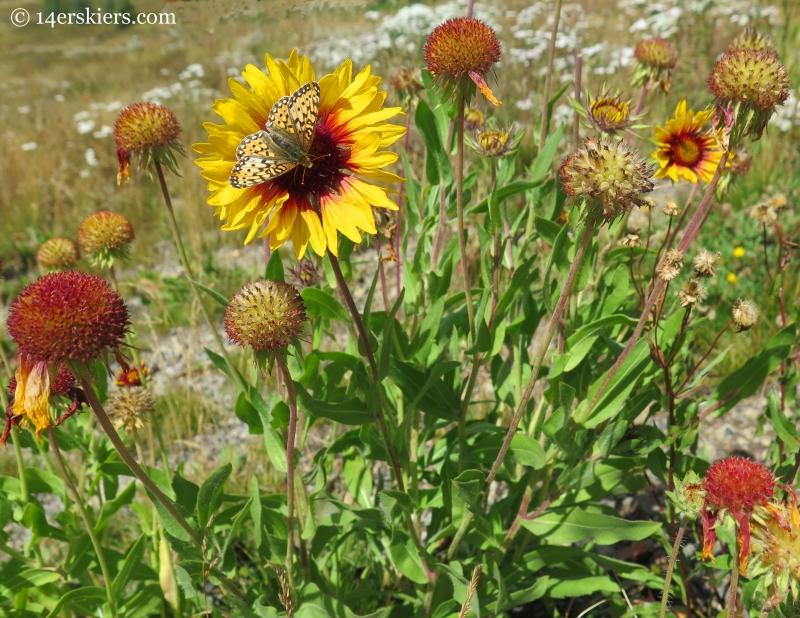flowers on Washington Gulch