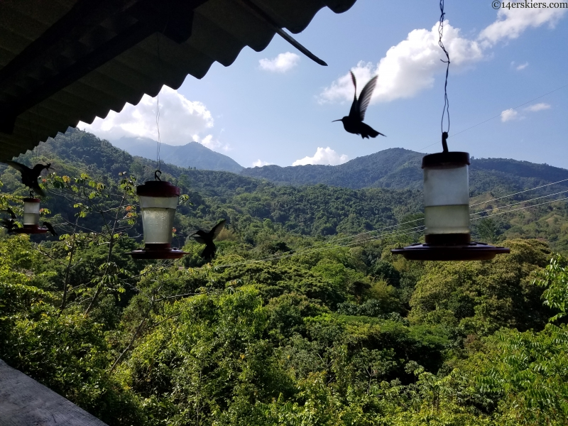 hummingbirds in minca, colombia