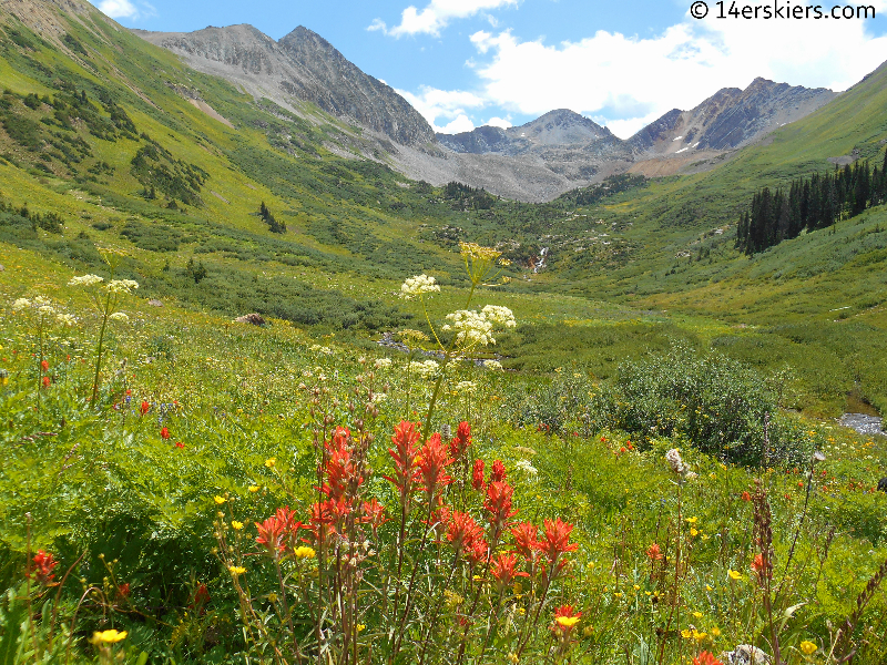 wildflowers in Rustler Gulch near Crested Butte