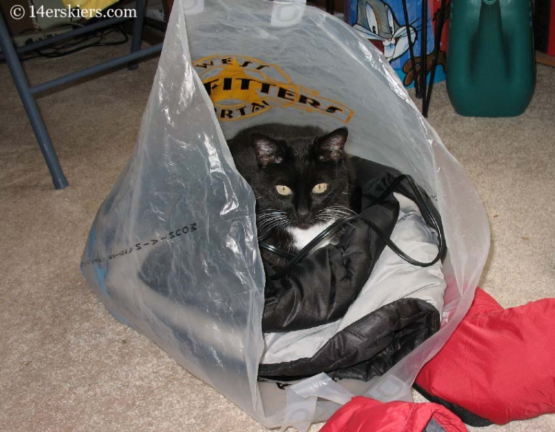 Cat in bag.