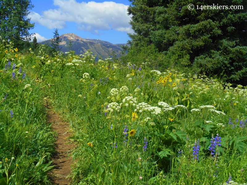 wildflowers on Prospector trail at Crested Butte Mountain Resort