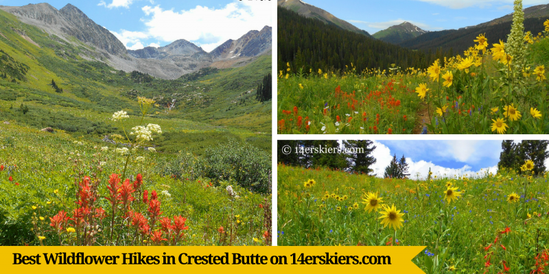 Best Wildflower Hikes in Crested Butte