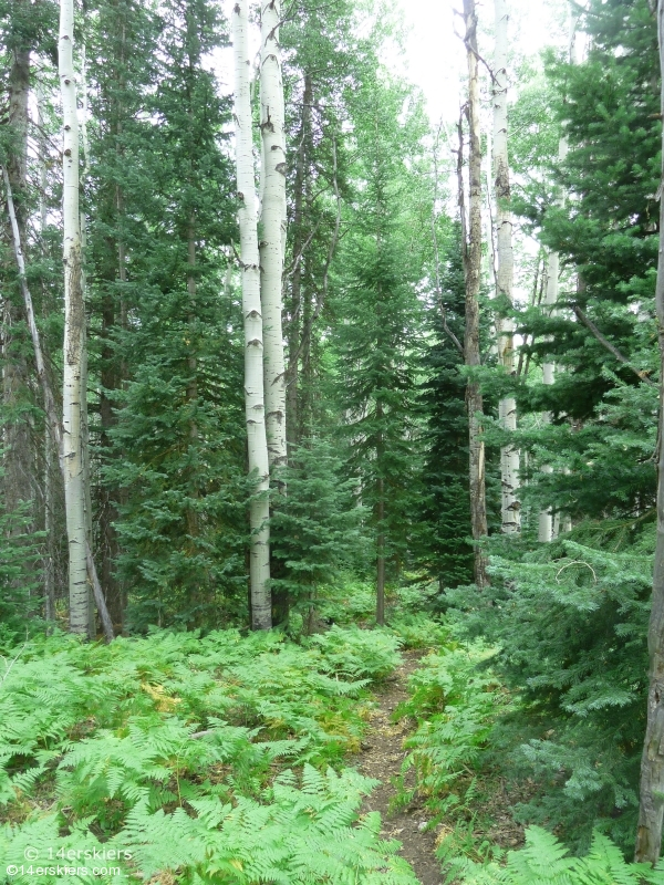 Hiking Ruby Anthracite Trail near Crested Butte, CO.