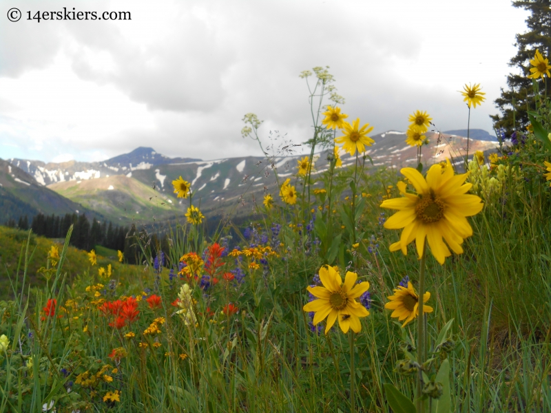 Wildflowers and mountains on the Schofield Pass Loop.