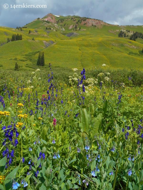 Wildflowers near West Maroon trail