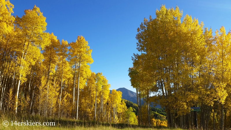 Fall colors in Crested Butte.