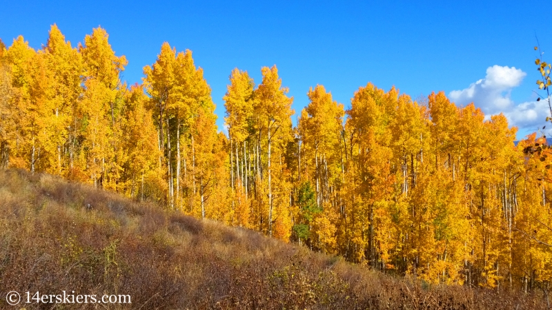 Fall leaves in Snowmass, Colorado.