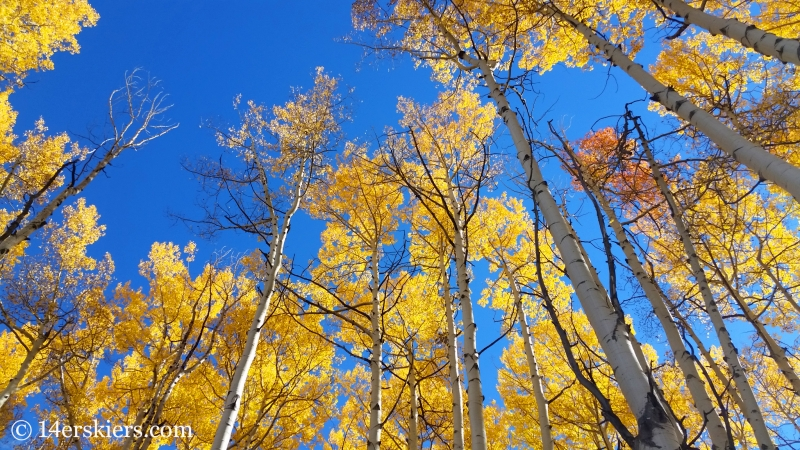 Fall leaves in Snowmass, CO