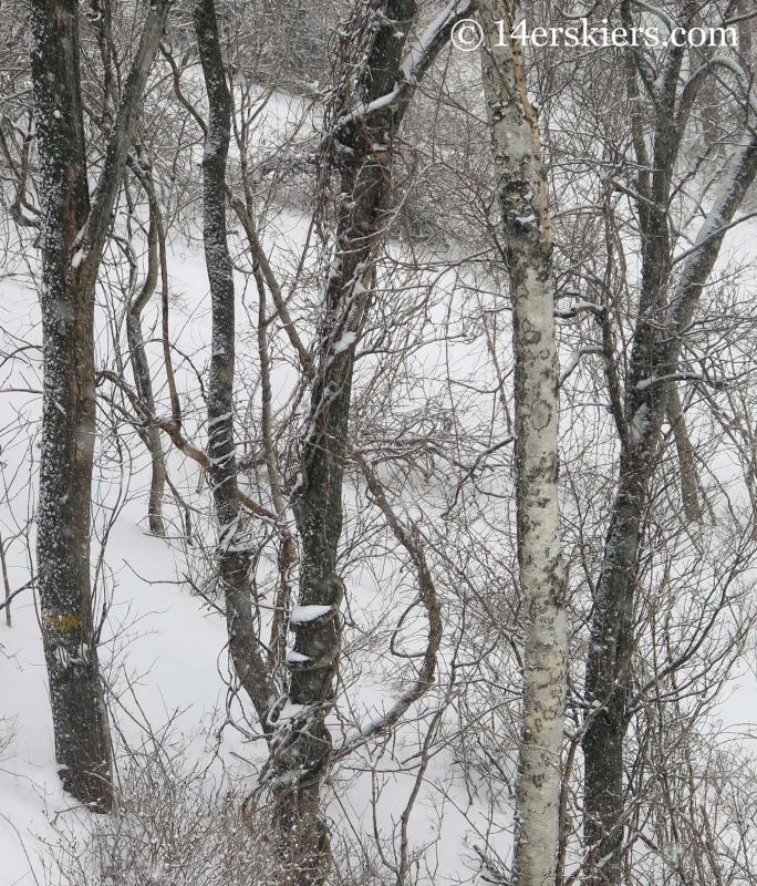 Trees at Yong Pyong ski area in South Korea.