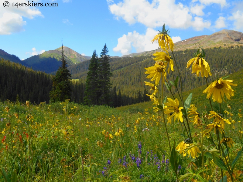 Triple Bipass Loop wildflowers