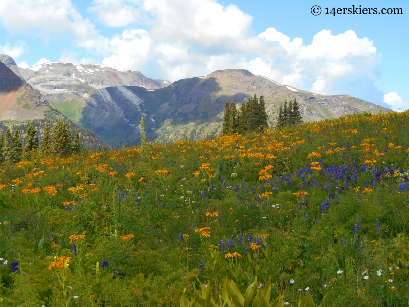 Wildflowers on the Triple Bipass Loop