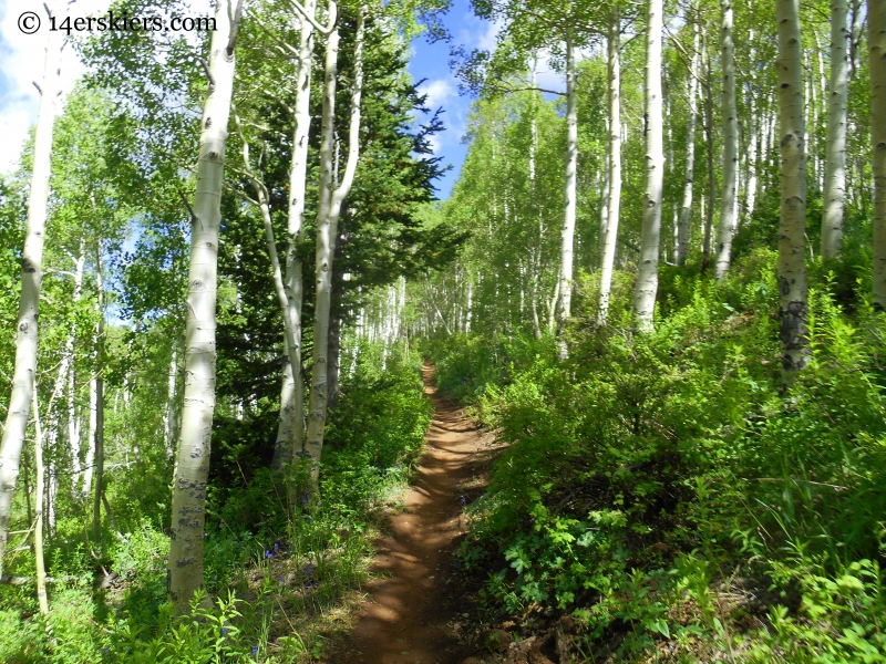 Aspen forest on the Wasatch Crest Trail