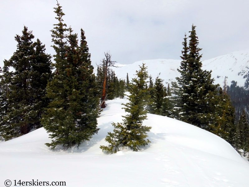 Backcountry skiing Loveland Pass Hippie Trees.