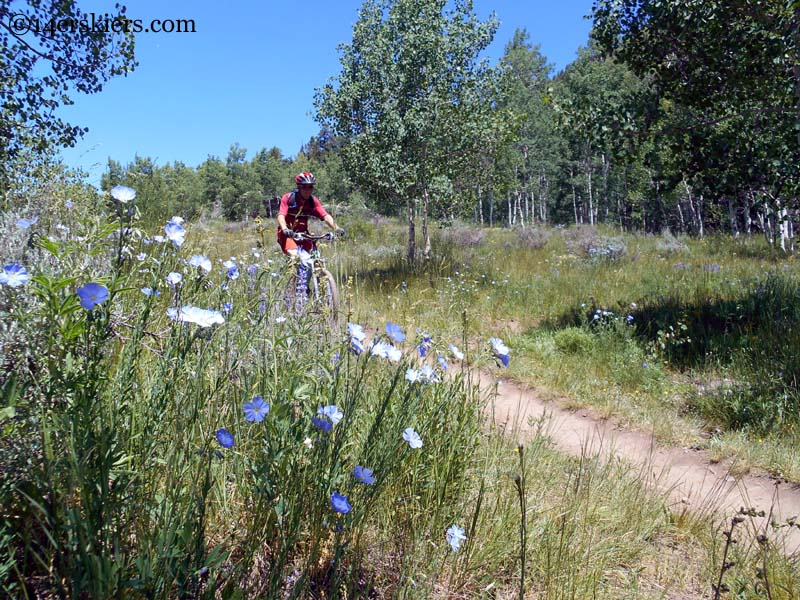 flowers on upper loop crested butte