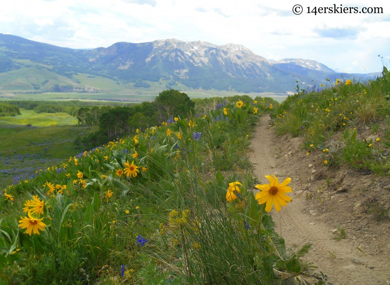 mountain biking Point Lookout Trail near Crested Butte