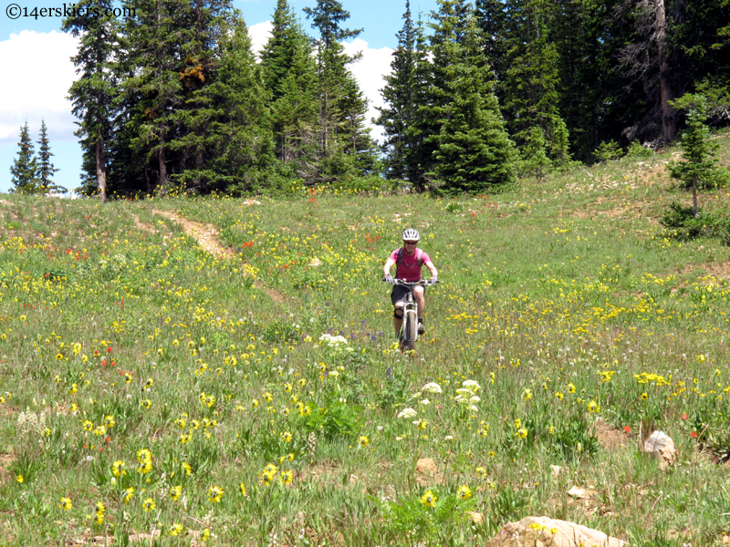 mountain biking in flowers