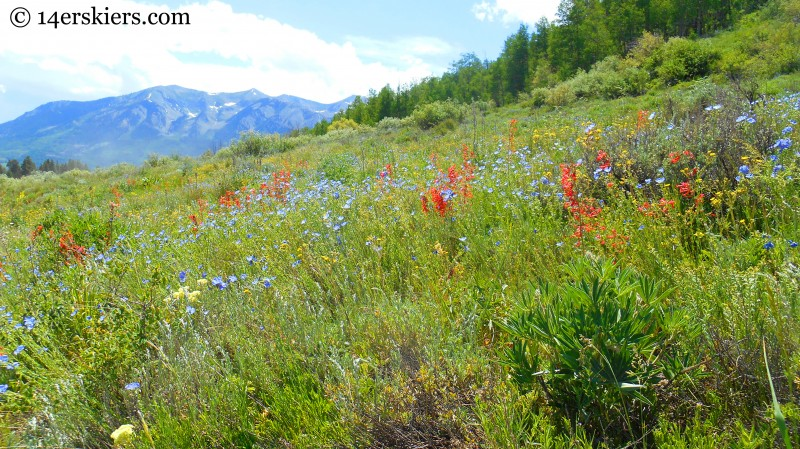 Hiking Brush Creek Trail in Crested Butte