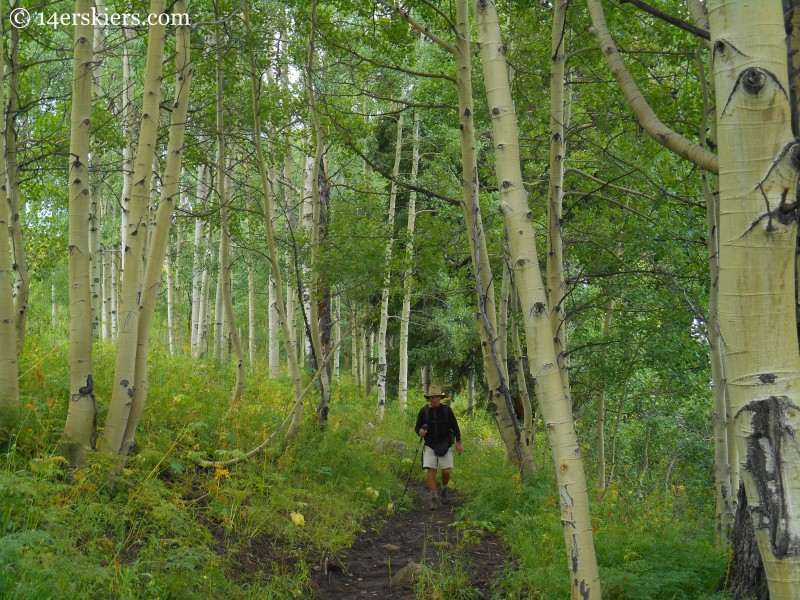 Aspen forest on trail from Horse Ranch to Swampy Pass